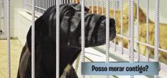 Relatório de monitorização do Canil-Gatil Intermunicipal referente ao ano de 2017